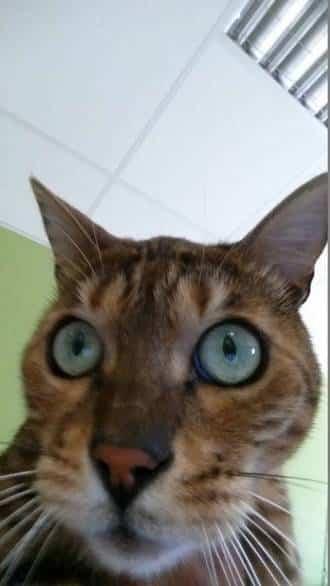 selfie capteur S5